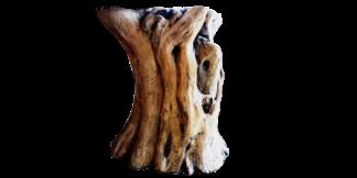 tronco de olivo singular